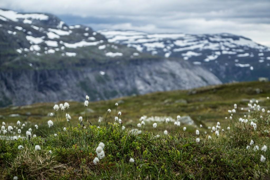 Ania_w_podrozy-blog-Norwegia-2015 (119)