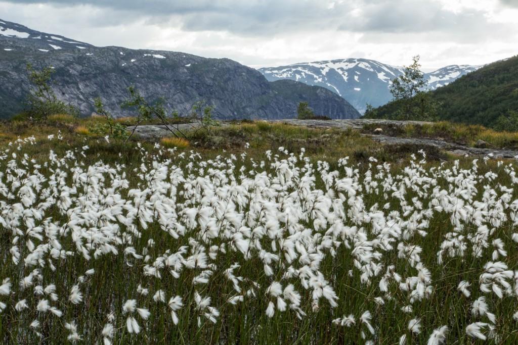 Ania_w_podrozy-blog-Norwegia-2015 (134)