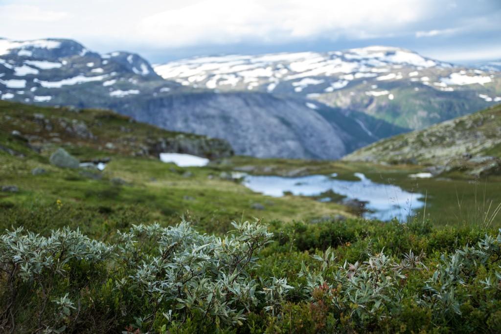 Ania_w_podrozy-blog-Norwegia-2015 (34)