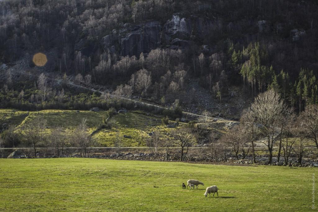 Ania-w-Podróży-2016-Norwegia-Preikestolen-BLOG-102