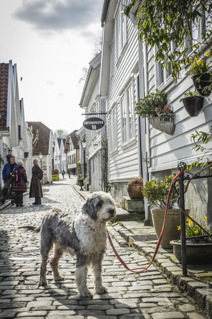 Ania-w-Podróży-2016-Norwegia-Preikestolen-BLOG-133